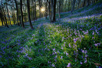 Bluebell sunset at Margam woods  von Leighton Collins