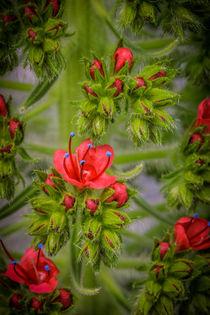 'Frühlingserwachen' von Gisela Peter