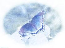Red Spotted Purple Butterfly - Pastel von Gena Weiser