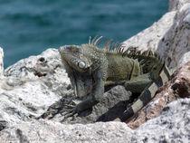 Welcome to Curacao von Gena Weiser