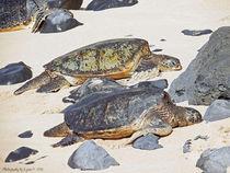 Sea Turtles by Gena Weiser