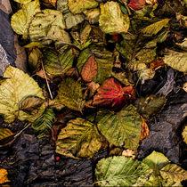 Alder Leaves 2015 von Fredrick Denner