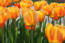 Tulpen in Orange 2 von Monika Jasmine