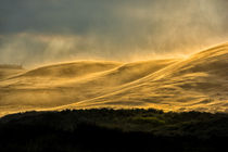 Sandsturm von Ingo Lau