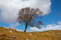 Single-tree-scotland-apr-2016-1