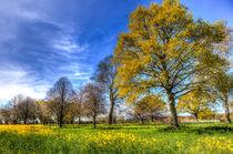 The Summer  English Field by David Pyatt