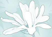 Mothers-magnolia-06-hr