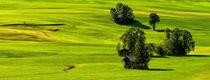 Grünes Land von Ingo Lau