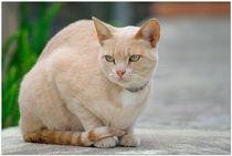 Katze by hibiskus
