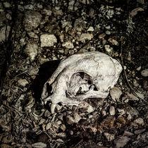Lynx Skull von Fredrick Denner