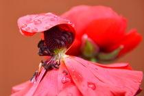 Regenschutz von gugigei