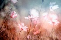spring by Rosina Schneider