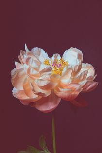 Die Schönheit der Vergänglichkeit by Susi Stark