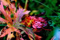 Herbstblatt  by Lukas Maisch