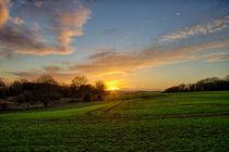Dream of Daylight von Vicki Field