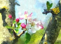 apple blossom by Wolfgang Pfensig