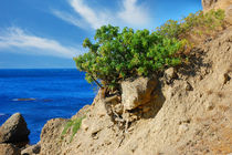 The tree on the side of a cliff  by Yuri Hope