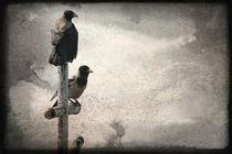 Sorrowful crow von Alexandr Verba