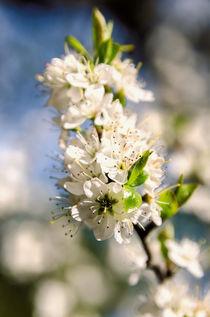 Blossom-warm