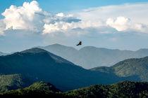 Brid Flying von Joao Henrique Couto e Silva