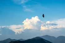 Bird flying von Joao Henrique Couto e Silva
