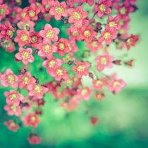 kleine Blütenpracht von Ruby Lindholm