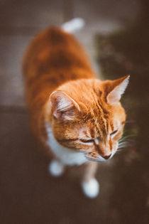 orange boy von Ruby Lindholm