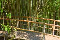 Brücke am Bambuswald by gugigei