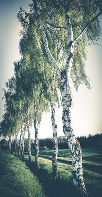 Birken von Ruby Lindholm