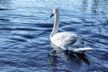 Swan On Lake by tastefuldesigns
