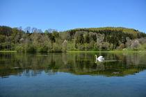 Schwanensee von gugigei