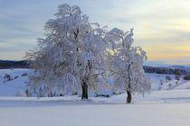 Winter auf dem Schauinsland Freiburg von Patrick Lohmüller