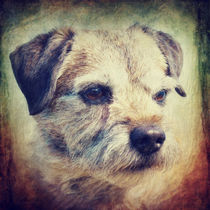 Lisa - Border Terrier von AD DESIGN Photo + PhotoArt