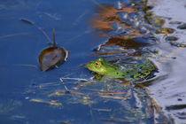 .. im Teich .. by gugigei