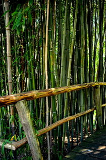 Bambusgarten von gugigei