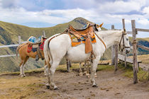 Two Horses Tied at the Top of Mountains in Quito Ecuador by Daniel Ferreira Leites Ciccarino