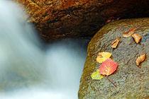 Herbst Blätter in Vermont von Borg Enders