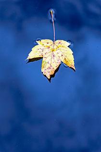 Herbst Blatt von Borg Enders