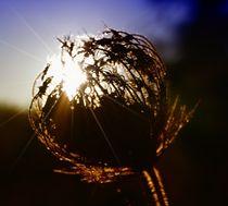 Abendsonne in Andalusien von Clemens Greiner