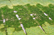Green - Salzwiesen Westerhever von AD DESIGN Photo + PhotoArt