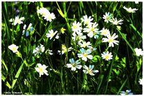 White & Green by Sandra  Vollmann