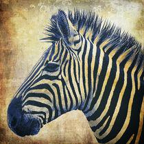Zebra-portrait-popart