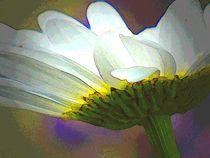 jugendblüte von hedy beith