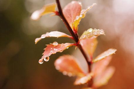 Herbstlicht-light-of-fall