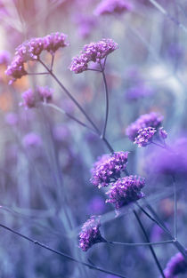 lila stimmung - in purple mood by augenwerk