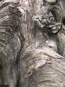 Elefant im Baum by nachtlicht