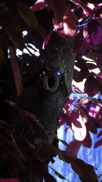 Kobolde,Gnome...verwunschen by nachtlicht