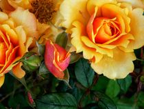 World of Roses ~ by bebra von bebra
