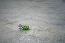 Trockenpflanze by Peter Jean Geschwill