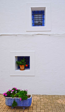 white wall and flower von emanuele molinari
